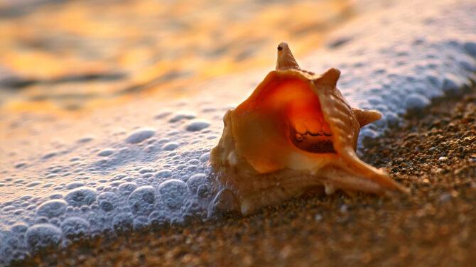 Nem a tenger morajlik a kagylóban?!